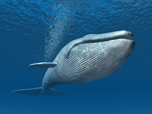 Whale of aLife